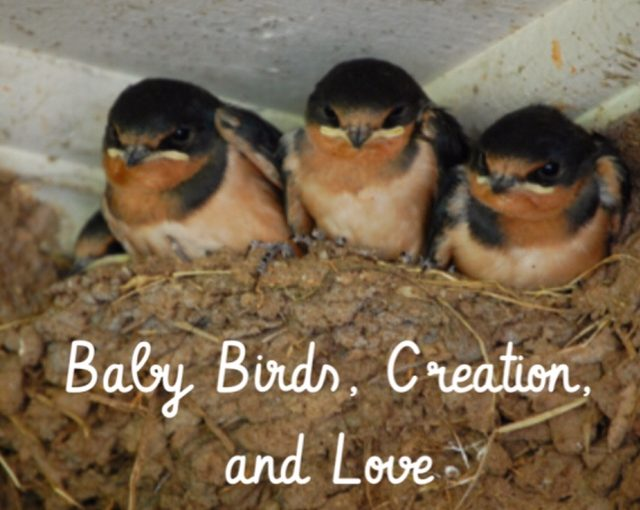 Baby Birds, Creation, and Love